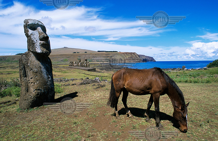 Horse grazing next to a moai at Ahu Tongariki. There are around six hundred moai stone statues on Easter island, believed to have been carved by the island's Rapanui Polynesian inhabitants between 1600 and 1730.