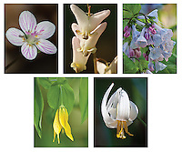 Woodland Wildflowers Note Card set