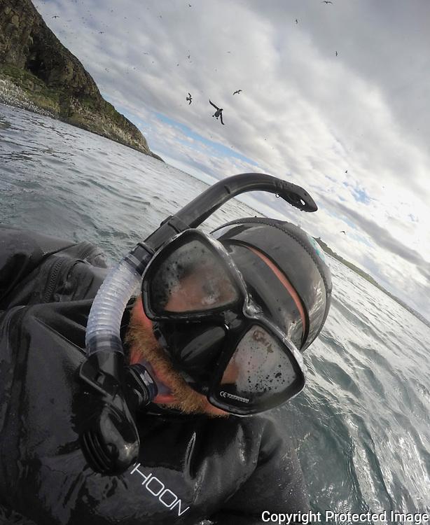 Mann med tørrdrakt, dykkermaske og snorkel i sjøen utenfor Hornøya. ----- Man swimming with sea birds.