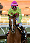 December 2 2018:  #13 Uni, ridden by Joel Rosario returns to the connections after winning the Matriarch Stakes (Grade l), on December 2, 2018, at Del Mar Thoroughbred Club in Del Mar, CA(Photo by Casey Phillips/Eclipse Sportswire/CSM