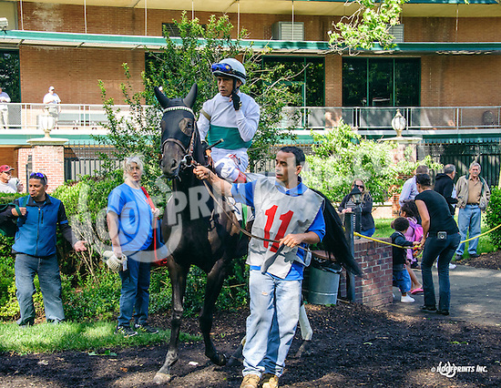 It's the Truth before The Our Mims Stakes at Delaware Park on 6/8/16