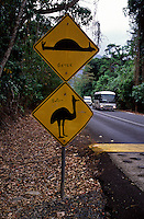 The main road to Cape Tribulation area cuts through the home ranges of at least four different birds. These locations are marked by Cassowary signs. When you see the Cassowary road sign SLOW DOWN. Vehicle traffic is the number one cause of adult Cassowary deaths.