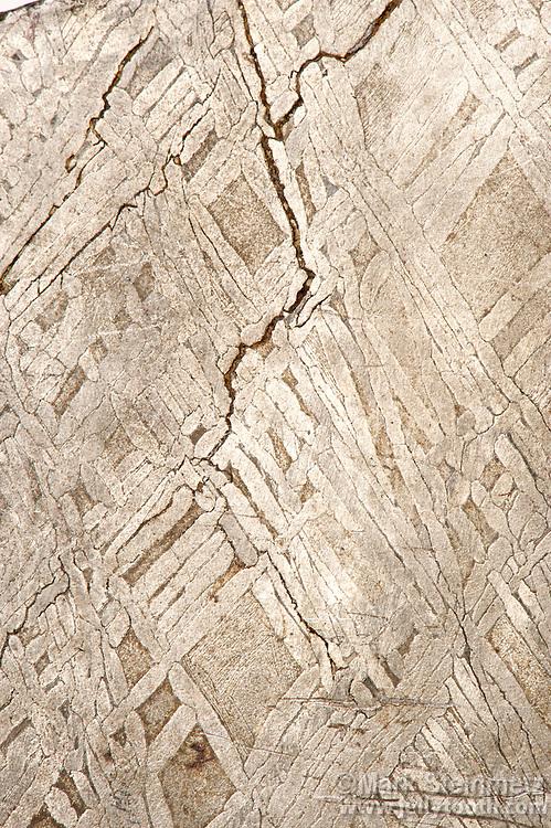 Widmanstatten Pattern In Iron Meteorite Mark Steinmetz Amazing Widmanstatten Pattern