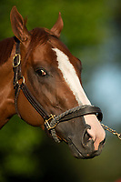 LOUISVILLE, KY - MAY 1: Good Magic, trained by Chad Brown, at Churchill Downs on May 1, 2018 in Louisville, Kentucky. (Photo by Eric Patterson/Eclipse Sportswire/Getty Images)