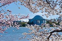 Jefferson Memorial, Nations Capital, Cherry Blossom trees,  Spring, District of Columbia,