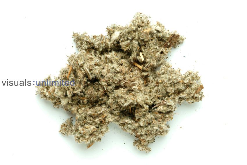 Artichoke dried and cut leaves (Cynara scolymus)