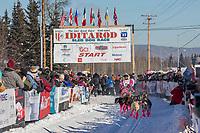 2017 Iditarod sled dog race restart in Fairbanks, Alaska.