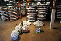 Baskets and trays of silkworm cocoons waiting to be processed into silk thread. Da Lat, Vietnam