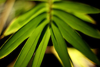 bamboo leaves lit up