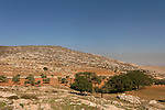 Samaria, Kermes Oaks (Quercus Caliprinos) and Olive trees  in Yanun