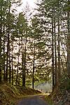 Backlit trees lining a backwoods gravel road trailhead