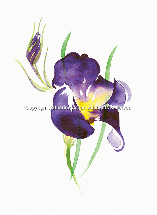 Watercolour painting of purple iris