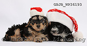 Kim, CHRISTMAS ANIMALS, photos, GBJBWP36193,#XA# stickers