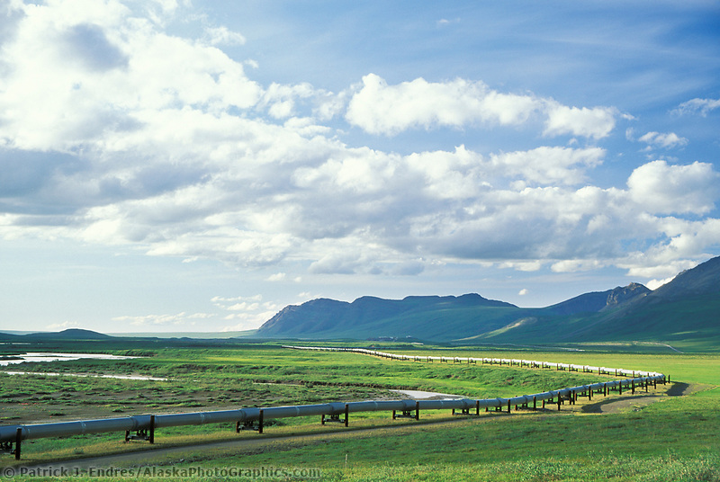 The Trans Alaska oil pipeline stretches across the green summer tundra of Alaska's Arctic coastal plains, Arctic, Alaska.
