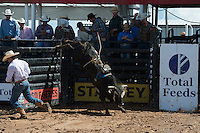 456 Floyd's 456 of Damien Sanchez/ Shuler Bucking Bulls during the American Bucking Bull, Incorporated event in Decatur, TX - 6.3.2016. Photo by Christopher Thompson