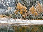 Yosemite National Park, California<br /> Late autumn snowfall on trees with reflections on the still Merced rive, Yosemite Valley at Sentinel Beach