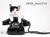 Xavier, ANIMALS, cats, photos, SPCHCATS713,#A# Katzen, gatos