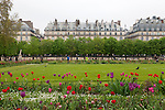 Tuileries Gardens (Jardin des Tuileries) and Parisian architecture in spring, Paris, France, Europe