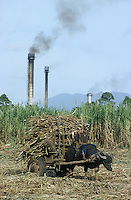 jbo70350 asia Philippines Negros agriculture biomass energy landless labourer people work on sugarcane sugar cane plantation hazienda carabao transport with bullock cart water buffalo sugar factory with exhaust pipe pollution .Asien Philippinen Negros Landwirtschaft landlose Landarbeiter bei Zuckerrohrernte Zucker Zuckerrohr Transport mit Wasserbüffel Karren Zuckerfabrik mit rauchenden Schloten Abgase Luftverschmutzung Biomasse Bagasse Energie .vertikal Hochformat.copyright Joerg Boethling/agenda ph. ++49 40 39190714