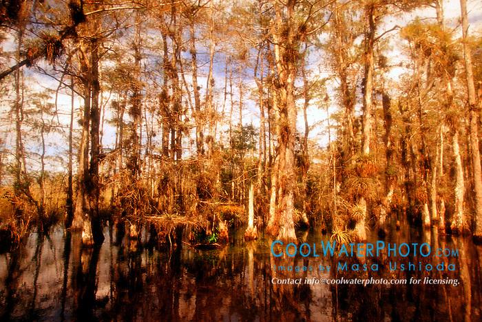 Big Cypress National Preserve, .Everglades National Park, .Ochopee, Florida
