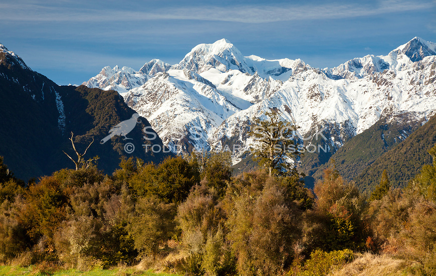 Snow coverd Mt Cook / Aoraki and Mt Tasman from near Lake Matheson, South Westland, South Island, New Zealand