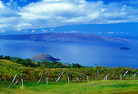 View from Tedeschi vineyard with Kahoolawe in backround