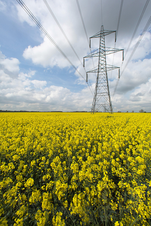 Electricity pylons on farmland<br /> Picture Tim Scrivener 07850 303986