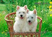 Marek, ANIMALS, REALISTISCHE TIERE, ANIMALES REALISTICOS, dogs, photos+++++,PLMP3191,#a#, EVERYDAY