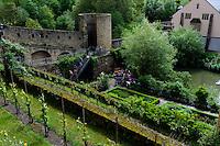 Weinberg bei der Brücke Stierchen über die Alzette in Grund, Stadt Luxemburg, Luxemburg