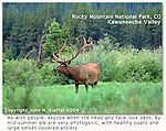 "From John's 3rd book: ""Mastering Nature Photography"".<br />