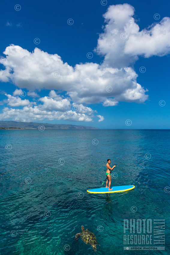 A woman standup paddles past a curious honu (green sea turtle) in the calm waters of Waimea Bay, O'ahu.