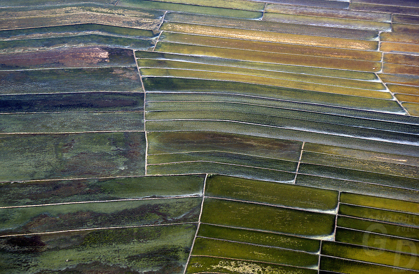 AERIAL TEXTURE NEAR MANILA, PHILIPPINES, RICE/SALT FIELDS FARMLAND