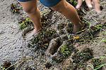 Fishing Cat (Prionailurus viverrinus) biologist, Anya Ratnayaka, walking through mud in urban wetland, Urban Fishing Cat Project, Diyasaru Park, Colombo, Sri Lanka