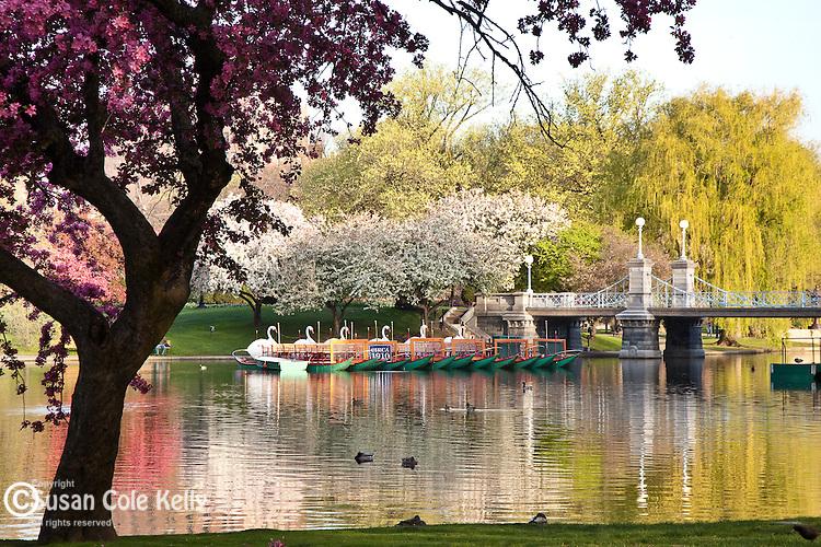 Springtime in the Boston Public Garden, Boston, MA, USA