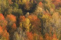 Italien, Piemont, Region Langhe, Herbstfarben, Laubbaeume | Italy, Piedmont, Region Langhe, autumn colours
