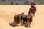 Pictured: A herd of Mongolian horses charge down a sandy mountain side as they race to a watering hole.   The hardy animals, which are native to Mongolia and are thought to be unchanged since the time of Genghis Khan, live outside all year and nomads herd three million of them.<br /> <br /> Having spent the day in grasslands up the mountain they charged down to an oasis in late afternoon to drink.   Freelance photographer Alessandra Meniconzi waited in the Central Mongolian foothills for them to emerge having spotted a cluster of yurta - the traditional Mongolian tents used by nomads.   SEE OUR COPY FOR DETAILS<br /> <br /> Please byline: Alessandra Meniconzi/Solent News<br /> <br /> © Alessandra Meniconzi/Solent News & Photo Agency<br /> UK +44 (0) 2380 458800
