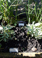 Each plant in the herb garden is clearly identified with a hand-written label