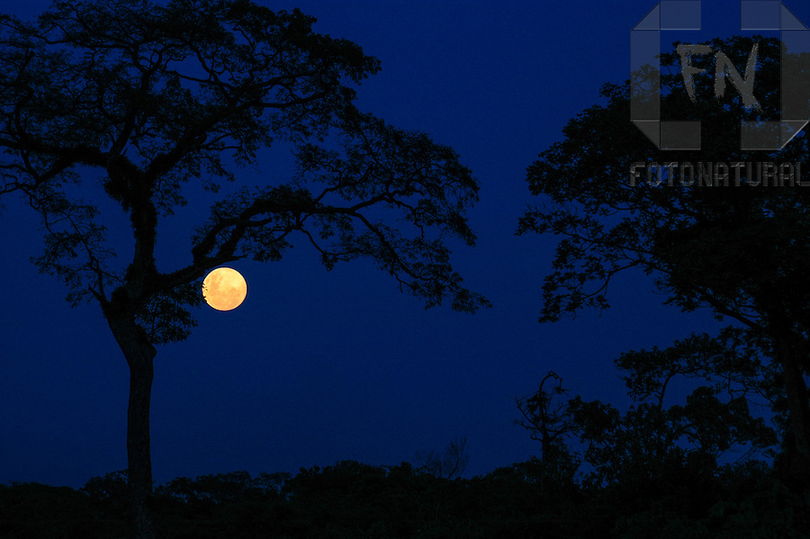 Fotografia noturna da lua em meio &agrave;s &aacute;rvores na Rodovia Rio-Santos (BR-101) | Nocturnal photography of the moon amid the trees in the Rio-Santos Highway (BR-101)<br /> <br /> LOCAL: Bertioga, S&atilde;o Paulo, Brasil<br /> DATE: 01/2006<br /> &copy;Pal&ecirc; Zuppani