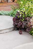Heuchera with purple foliage by cement concrete patio steps near deck, saxifraga in bloom, alchemilla, artemisia silver dust