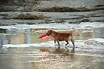 Dog with frisbee on beach