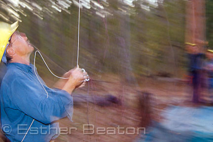 Researchers from State Forests setting net to trap a Masked Owl known to be in forest. Whiporee, northern NSW (blur)