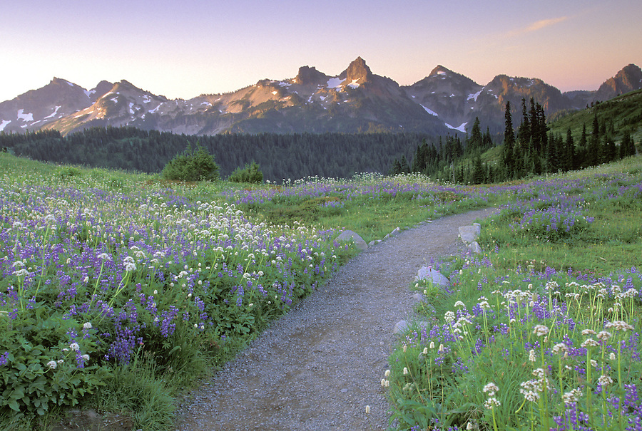 Sunrise over trail through alpine meadow and Tatoosh Range, Edith Creek Basin, Paradise, Mt Rainier National Park, Washington