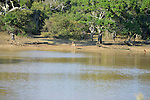 Yala National Park Sri Lanka<br /> Spotted Deer and Jungle Fowl