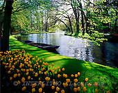 Tom Mackie, FLOWERS, landscapes, photos, Keukenhof Gardens, Lisse, Holland, GBTM990353-1,#F# Garten, jardín