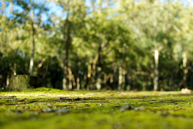 Parque Roosevelt, Canelones, Uruguay.
