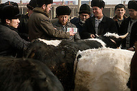 Uighur men discuss the sale of cows at the Kashgar Sunday Animal Market outside of Kashgar, Xinjiang, China.
