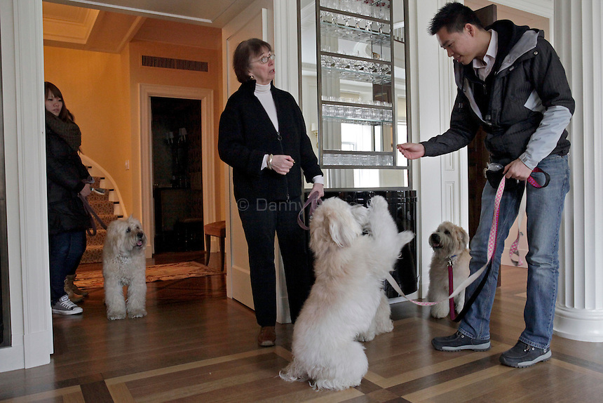 Pat McGregor, center, of Vancouver Dog Training and her employees Ming Tam, right, and Jessica Lin handle four wheaten terriers in an apartment on the Upper East Side of Manhattan on April 5, 2011. ..Danny Ghitis for The New York Times