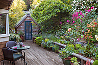 Hillside cottage garden with drought tolerant flowering shrubs and perennials in backyard with deck and rustic garden shed; Diana Magor Garden