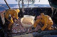 """Europe/France/Bretagne/29/Finistère/Le Guilvinec: Pêche à la langoustine sur le """"Gwenvidik"""""""