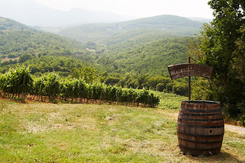 Vineyard. Strantza village near Naoussa. Macedonia, Greece.